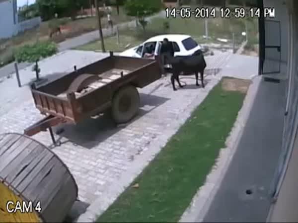 Krádež za bílého dne