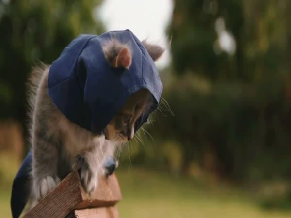 Koťata - asasíni