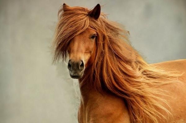 GALERIE -  20 koní s nádhernými účesy