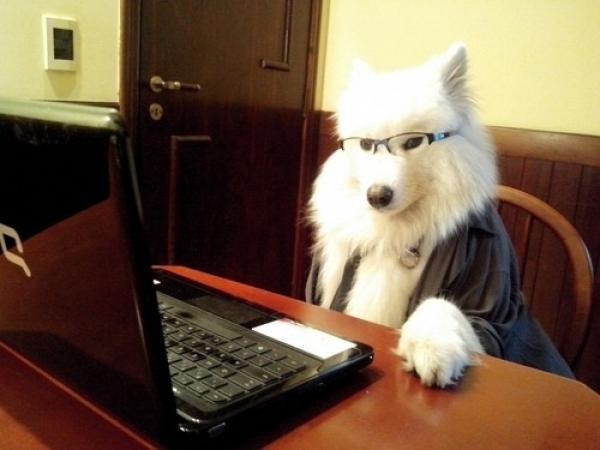 GALERIE - Psi, které nemůžete brát vážně