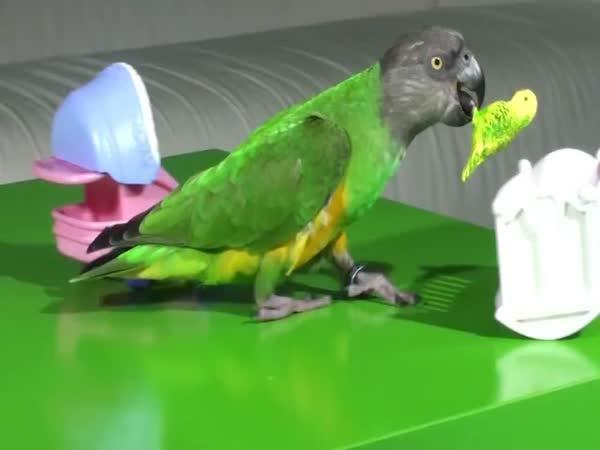 Trénovaný papoušek - jak být mámou