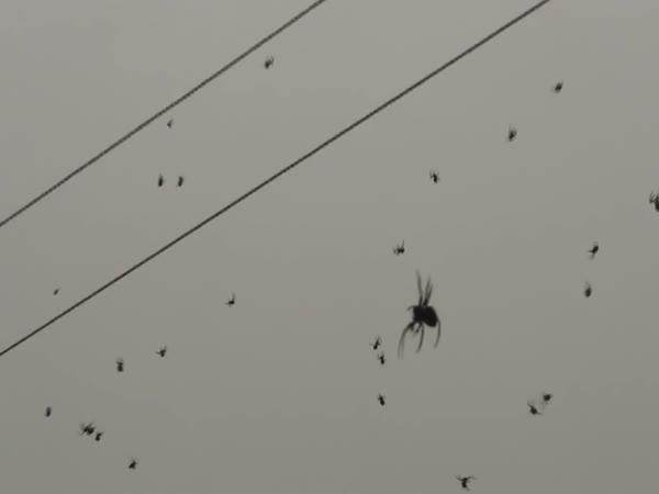 Příšerná invaze pavouků