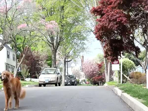 Venčení psů pomocí dronů
