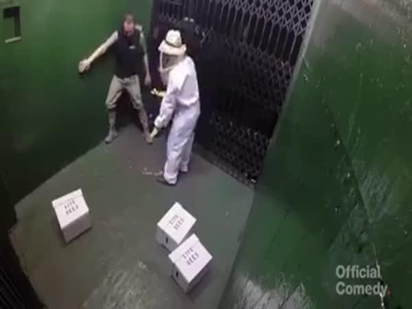 Nachytávka - nešikovný včelař