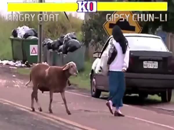 Street Fighter - Rozzuřená koza
