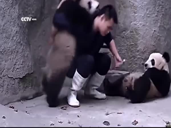 Dvě pandy nechtějí svou medicínu