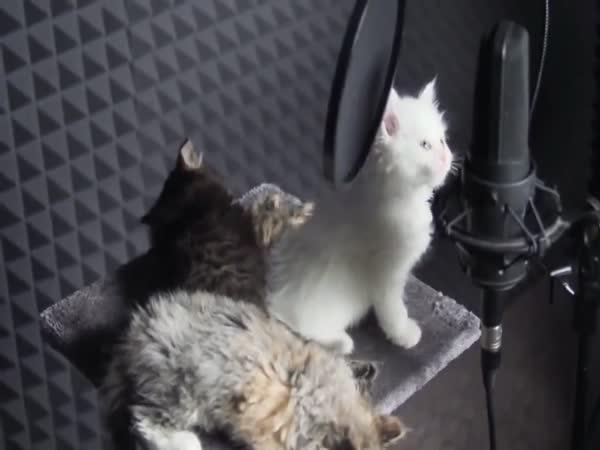 Zpívající koťátka