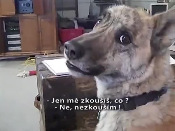 Pes a jídlo