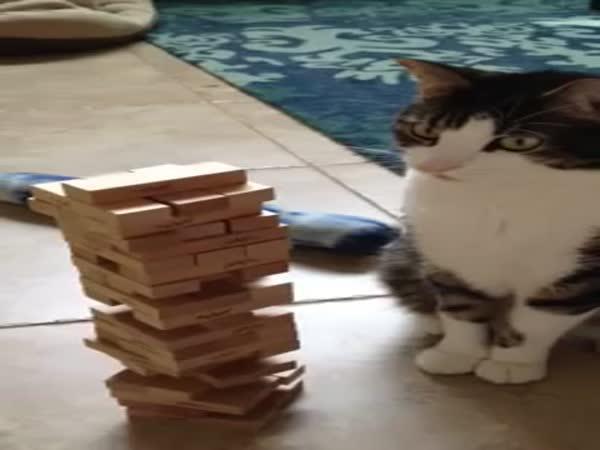 Kočka & Jenga