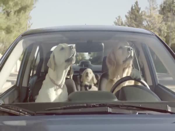 Subaru - Reklama se psy