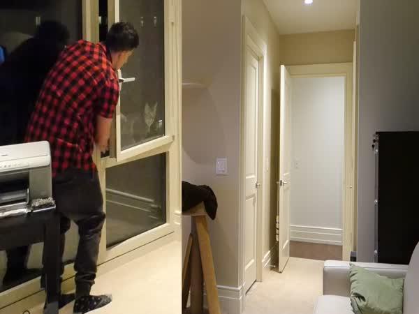 Maník hodil kočku přítelkyně z okna