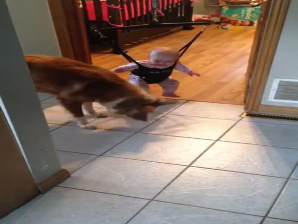 Pes učí miminko skákat
