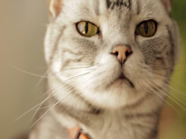 Milé kotě, toto je pes