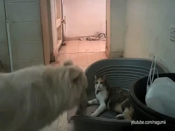 Když kočka zabere psovi pelech