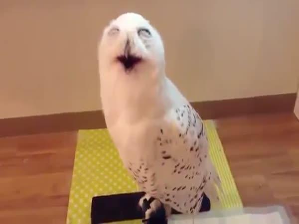 Vysmátá sova