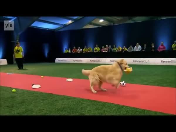 Elitní psí závody