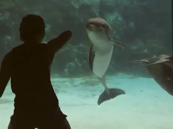 Delfín & gymnastka