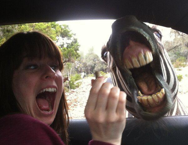 GALERIE - Šílené foto #8