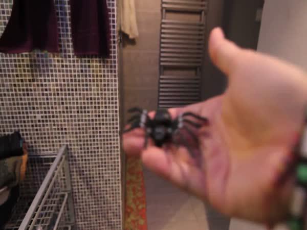 ViralBrothers - Pavouk ve sprše