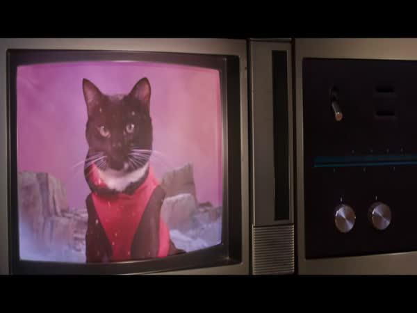 Kočky ve vesmíru