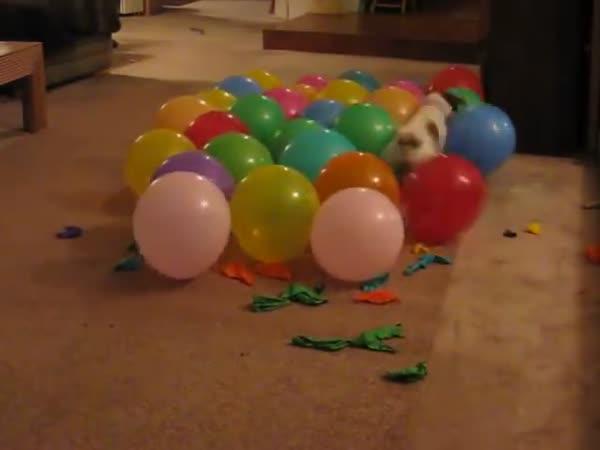 Pes v baloncích