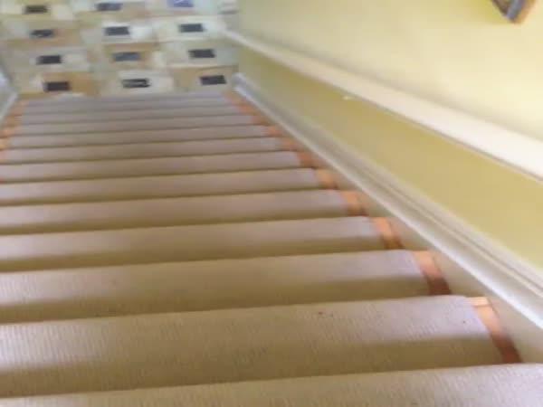 Pes jezdí po schodech dolů