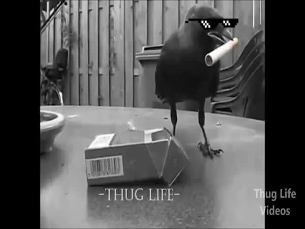 Největší zvířecí gangsteři