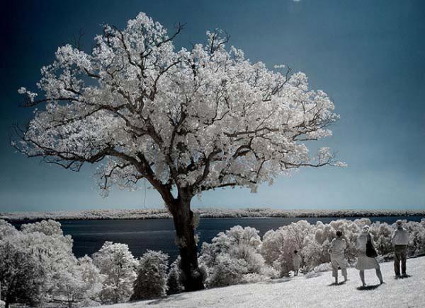 GALERIE - 15 nádherných fotografií stromů v krajině