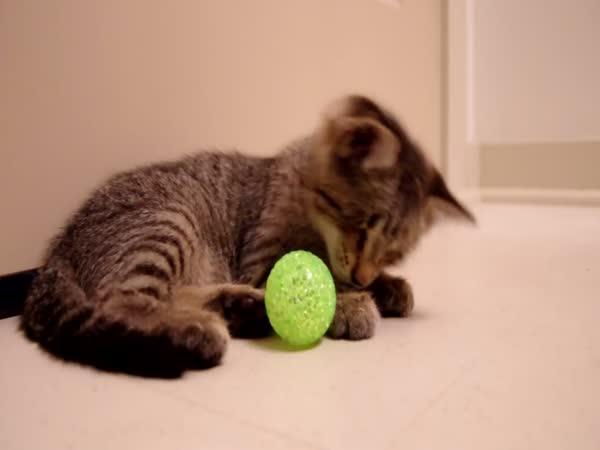 První hračka slepého kocoura