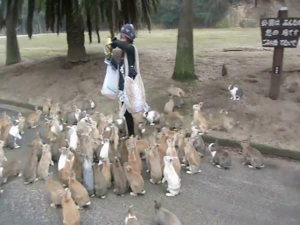 Invaze zajíců