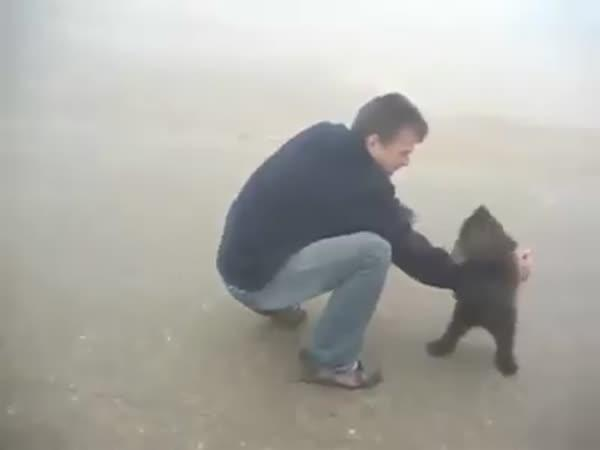 Neposedné medvědí mládě
