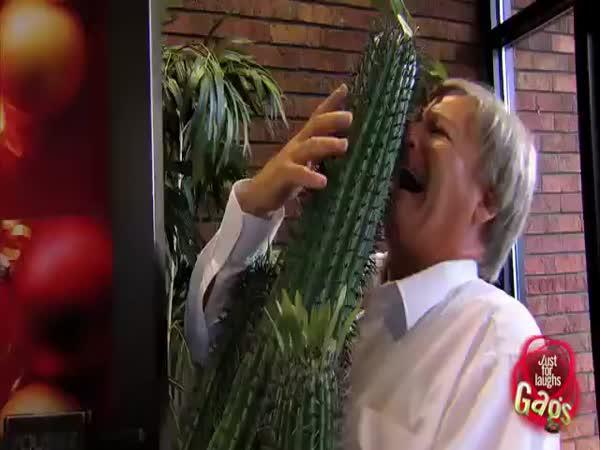 Nachytávka - Děda s kaktusem