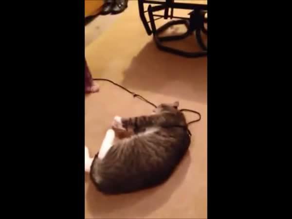 Kočka hraje mrtvou