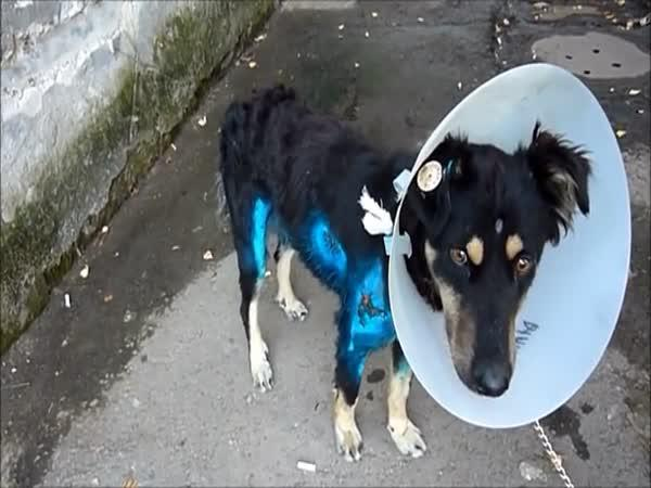 Neuvěřitelná přeměna psa po týrání