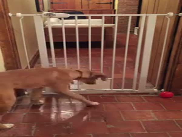 Pes na útěku
