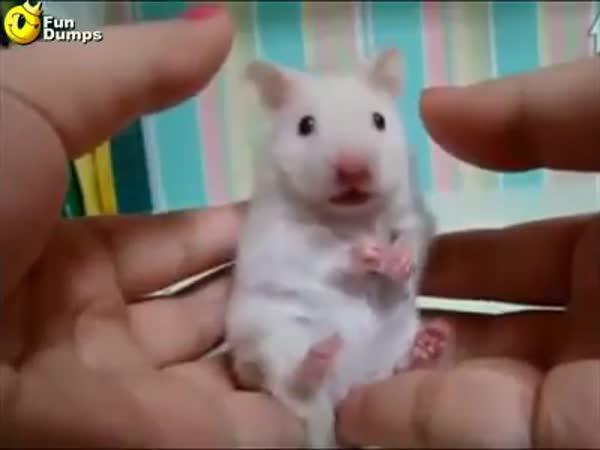 Vyděšený křeček