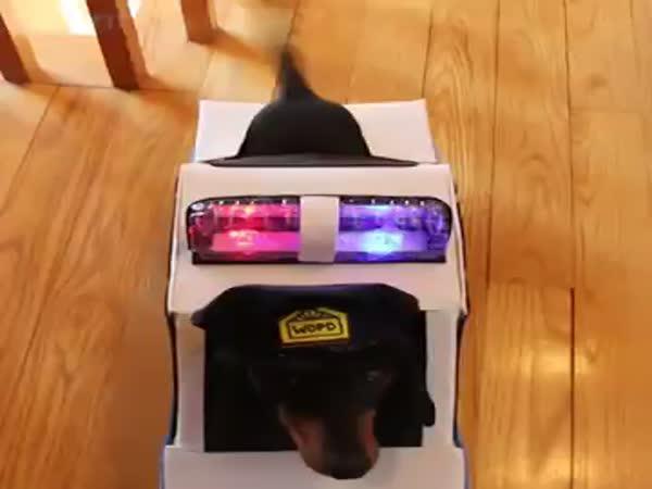 Psí policie