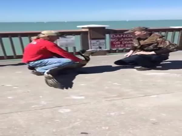 Záchrana pelikána