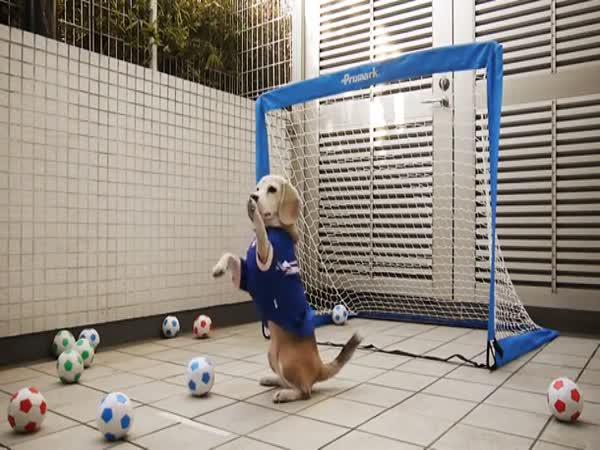 Pes jako fotbalový brankář