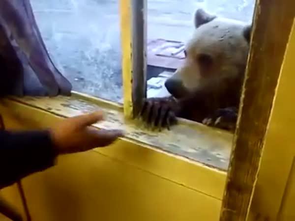 Svačinka s medvědem