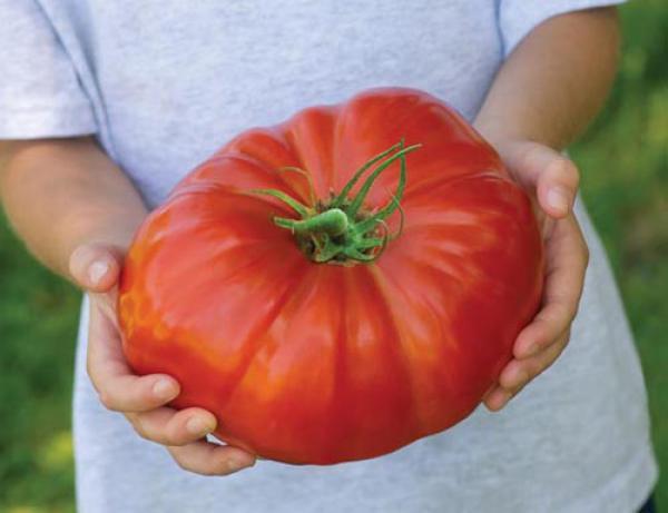 GALERIE - Potraviny neobvyklé velikosti