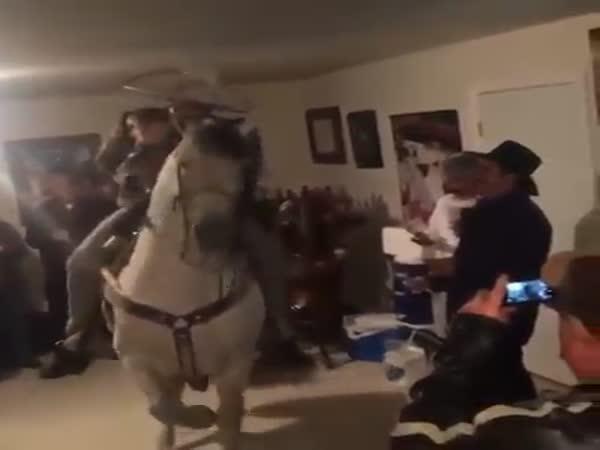 Kůň v obýváku