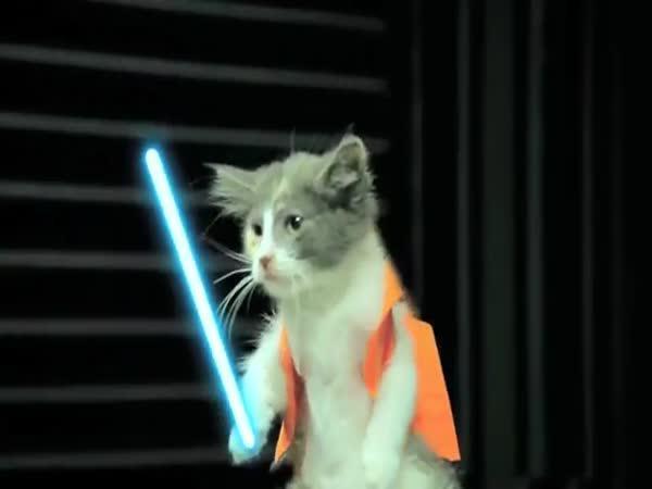 Star Wars kočky