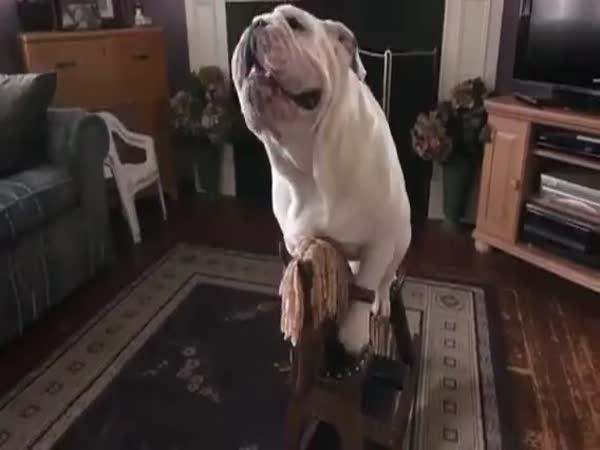 Pes jezdící na houpacím koni