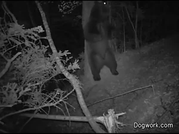 Co se děje v nočním lese
