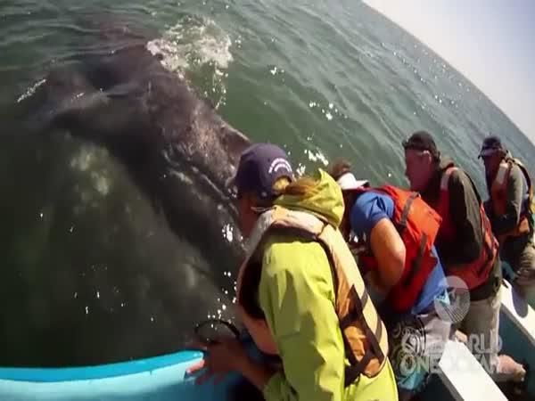Neuvěřitelné setkání s velrybou