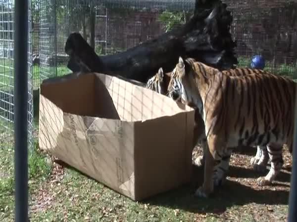 Kočky a krabice