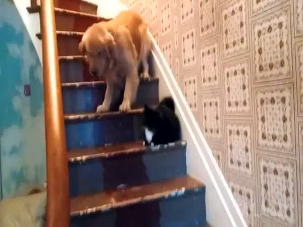 Kočky jsou svině