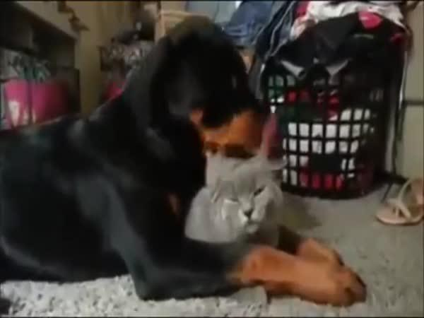 Láska mezi psem a kočkou - lízání