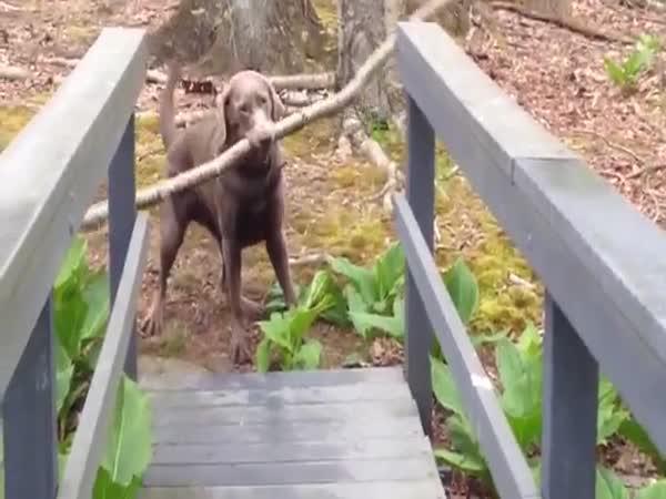 Chytrý pes a klacek